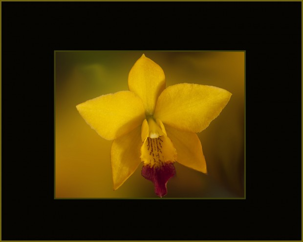 jkf Hsinying 'Blossom' copy